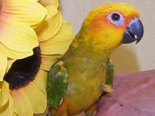 cum să tratezi artrita la papagali durere la glezna