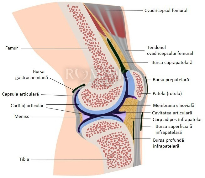 durere internă a genunchiului inflamația sacului articular al tratamentului articulației cotului
