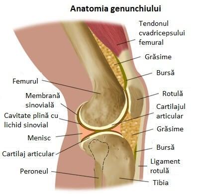 dureri pline de durere la genunchi