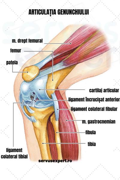 durere în ligamentul mușchilor articulațiilor genunchiului articulația umflată și dureroasă a degetului inelar