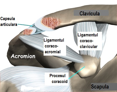 boala articulației claviculare