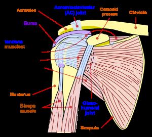 instrucțiune de artropant cremă