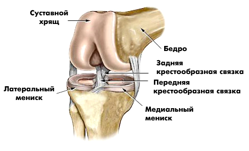 care este deteriorarea meniscului în articulația genunchiului dureri articulare pe coate
