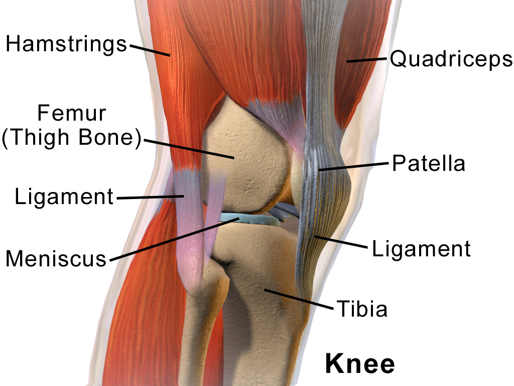 durere în ligamentul mușchilor articulațiilor genunchiului articulațiile mari doare umăr și genunchi