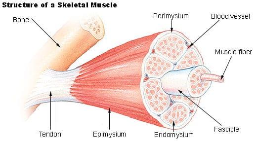 anestezie pentru artroza articulației umărului radiografia genunchiului în artroză