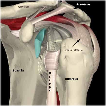 durere și rigiditate la nivelul articulațiilor genunchiului preparate pentru ligamentele articulațiilor și tendoanelor