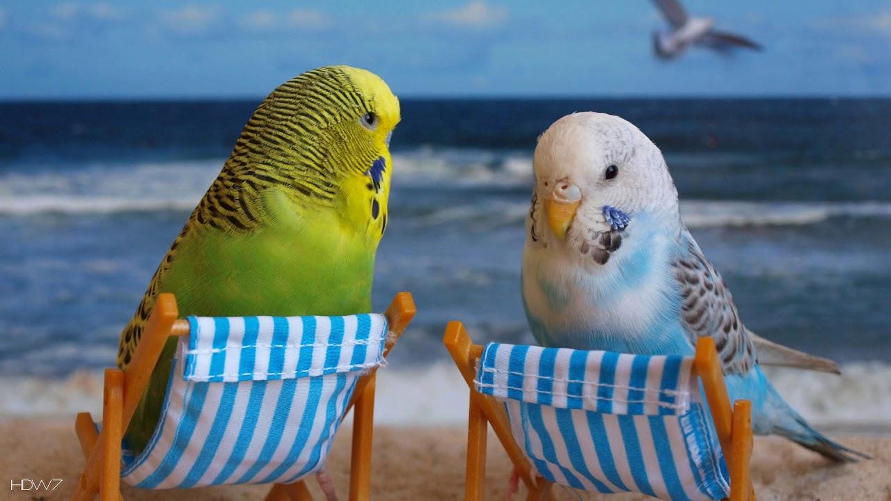 cum să tratezi artrita la papagali boli ale umărului-articulație