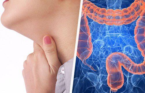Proprietăți de vindecare Kashkara pentru bolile articulare