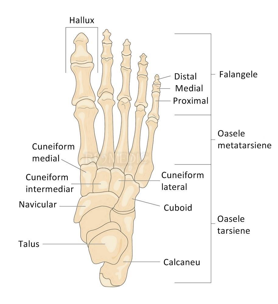oasele și articulațiile picioarelor doare inflamația tuturor țesuturilor articulației