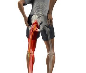 durere în articulația genunchiului și a coapselor tulburări hormonale. dureri articulare