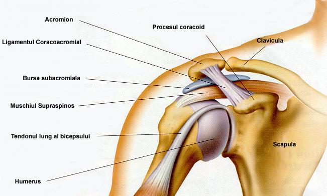 Nervul ciupit în tratamentul articulațiilor umărului