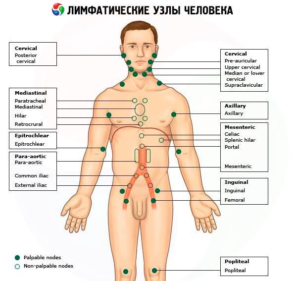 creșterea nodului limfatic în varicoză)
