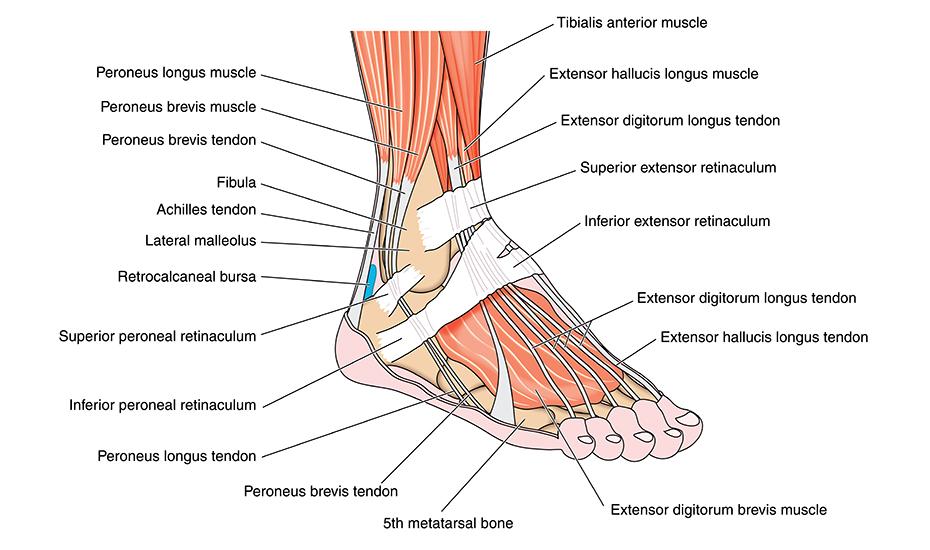 când mersul doare articulația piciorului