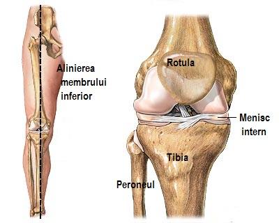 artrita purulentă a tratamentului articulației gleznei Nim Ayurveda în tratamentul artrozei