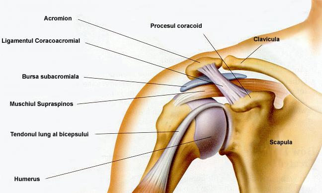 poate dureri în articulația umărului