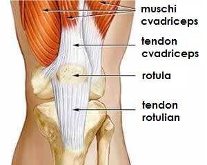 tratamentul articular cu butuc dureri articulare slăbiciune abdominală