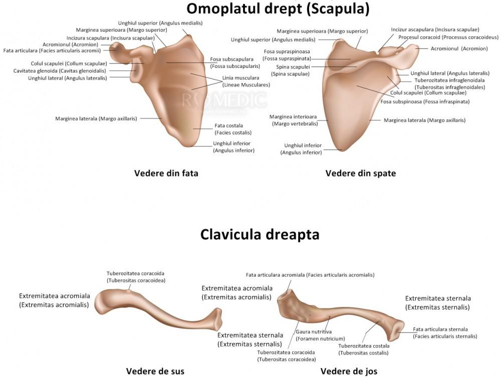 dureri de genunchi în homeopatie dureri articulare în timp ce făceau jogging