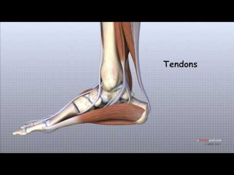 durere de coacere la genunchi
