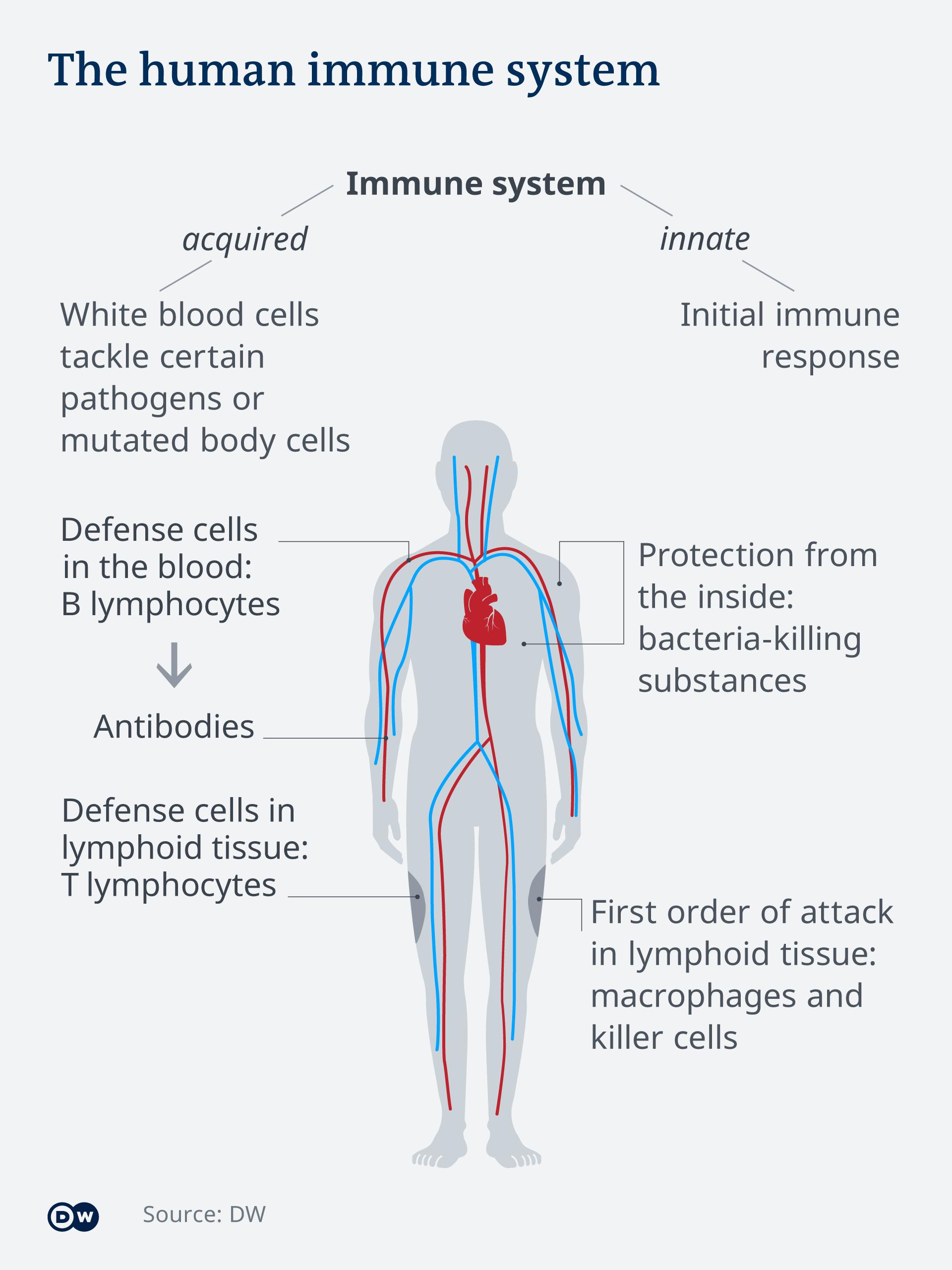 virus simptome dureri musculare la nivelul articulațiilor boala articulară unde se va trata