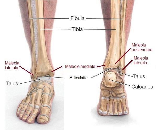 suplimente de artroză gleznele rănesc picioarele