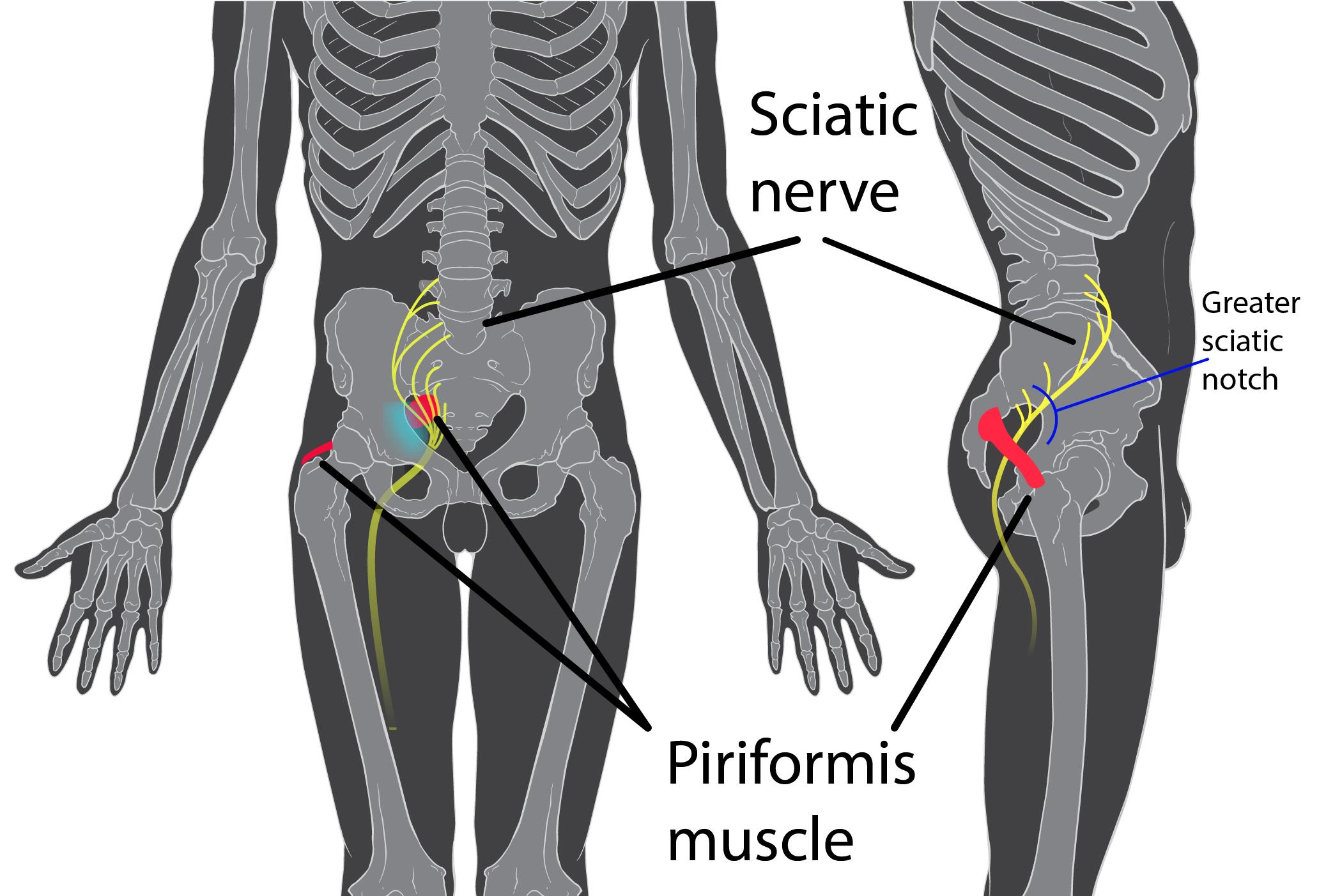 Gelatina este utilă pentru durerile articulare? durere la îndoirea cotului