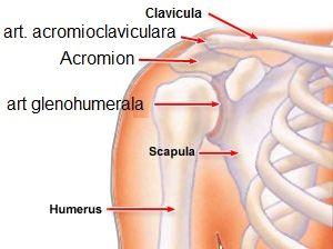 unde să tratezi articulațiile umărului