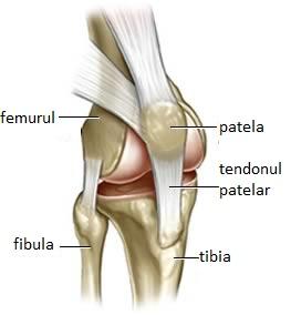 Este posibilă creșterea artrozei articulației genunchiului