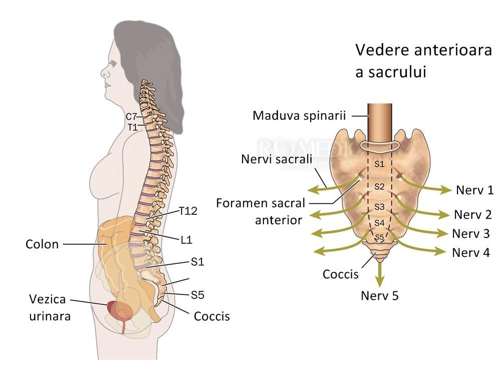 durere pe interiorul articulației cotului Vitaminele din grupa B pentru tratamentul articulațiilor