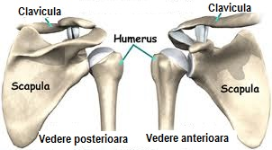 Articulația umărului și omoplatului - Durerea de umar