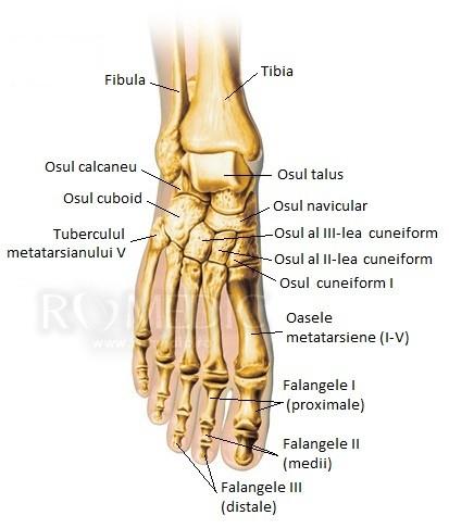 articulațiile falangelor degetelor de la picior doare
