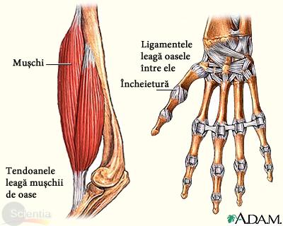 preparate pentru ligamentele articulațiilor și tendoanelor