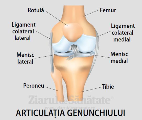 numărul de articulații la nivelul genunchiului