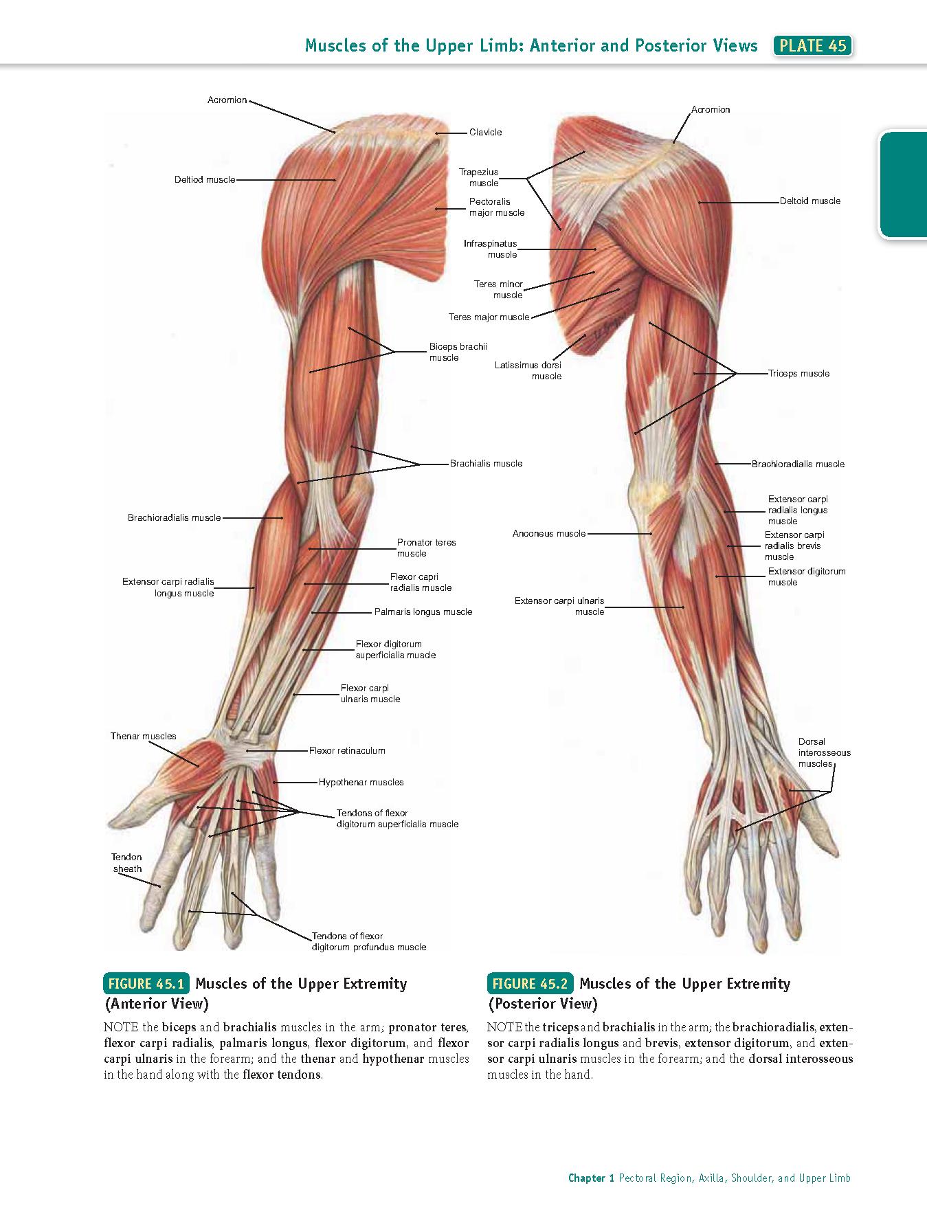 unguente de încălzire și geluri pentru articulații tăierea durerii în articulațiile degetelor