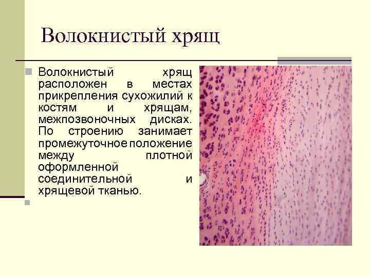 Țesutul conjunctiv este cartilajul fluid