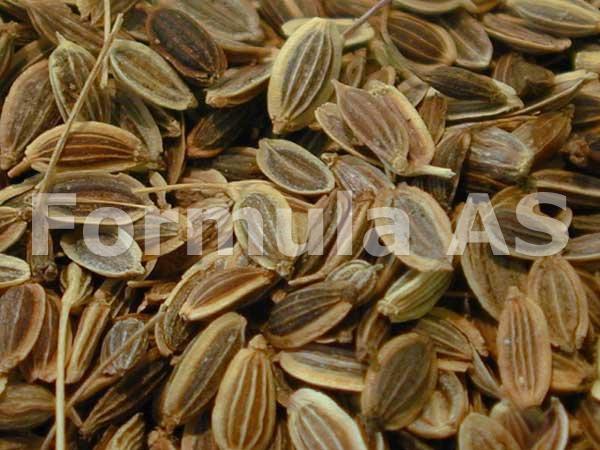 Marar - Anethum graveolens